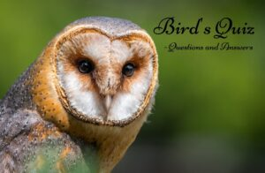 +60 Trivia Questions and Answers on Bird's Quiz